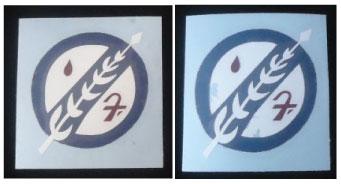 2-Feathers.jpg
