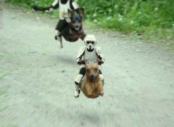 Biker Scout Dogs.jpg